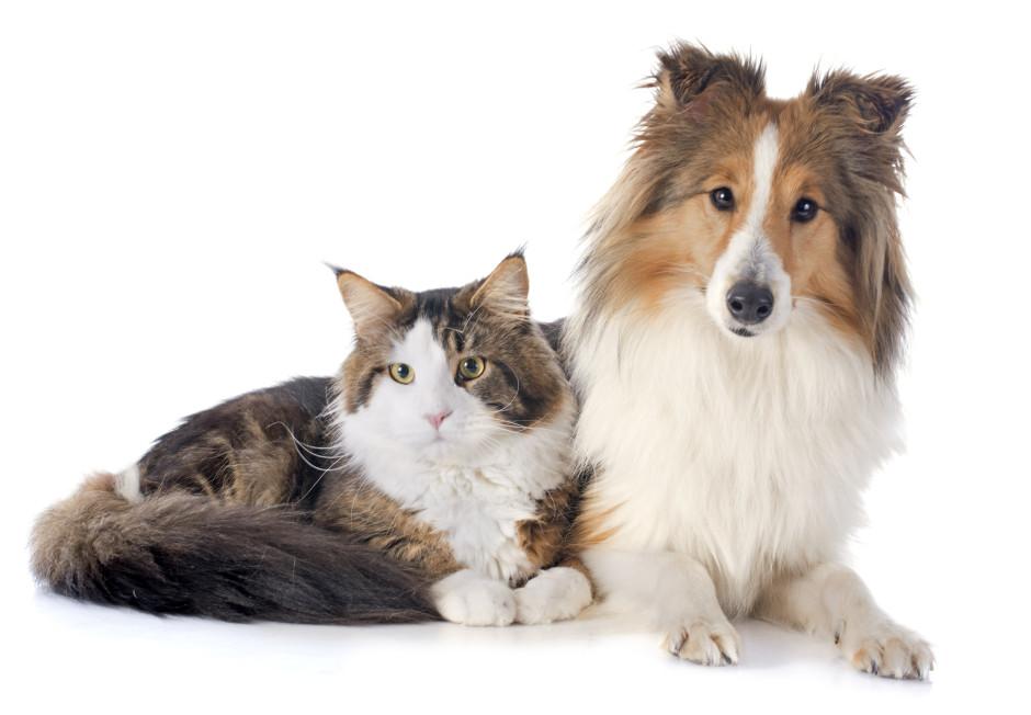 Cat and dog long hair 940x652 Изисквания за регистрация на зоомагазин