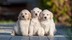vet clinic 300x168 Откриване на ветеринарна клиника